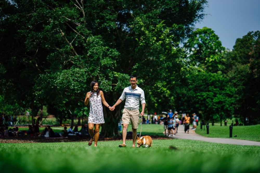 woman and man holding hands beside brown dog while walking on green grasses surrounded by green leafed trees